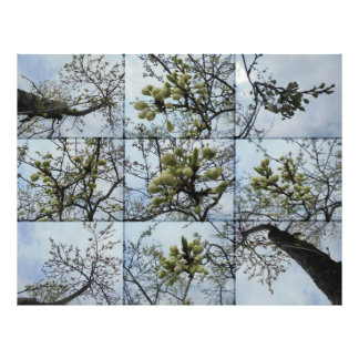 The emergence. Bunch of white buds Art Photo