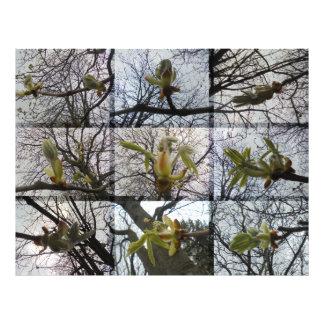 The emergence. Chestnut Photographic Print