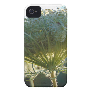 The End of Summer iPhone 4 Case-Mate Cases