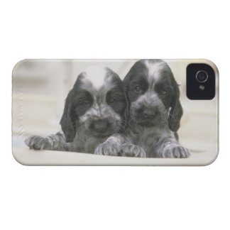 The English Cocker Spaniel is a breed of dog. It iPhone 4 Case-Mate Case
