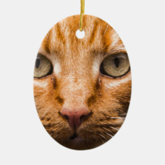The Essence of a Cat's Look Ceramic Oval Ornament