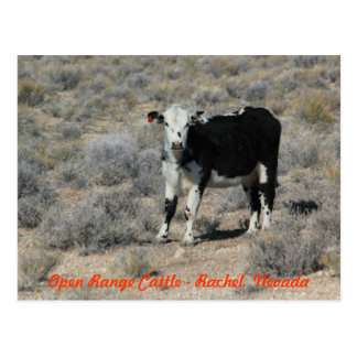 The ET Highway Cattle Nevada Postcard