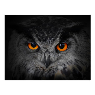 The Evil Eyes. ( Eagle Owl, Bubo Bubo) Postcard