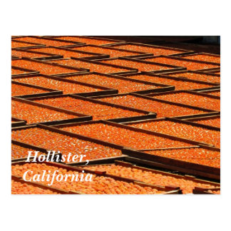 The Famous Apricots of Hollister, California Postcard