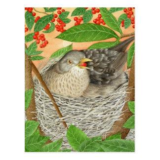 The Female Blackbird Postcard