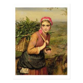 The Fern Gatherer Postcard