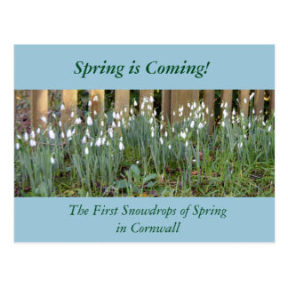 The First Snowdrops of Spring in Cornwall Postcard