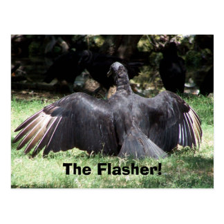 The Flasher! Postcard