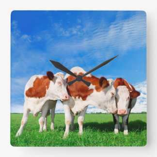 The flirting cows square wall clock