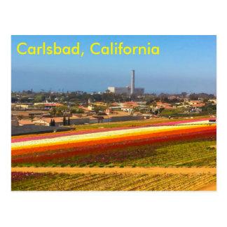 The flower fields postcard