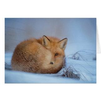 The Fox Card