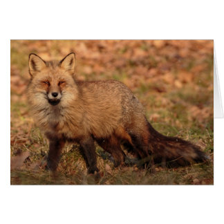 The fox knows: Blank Greeting Card