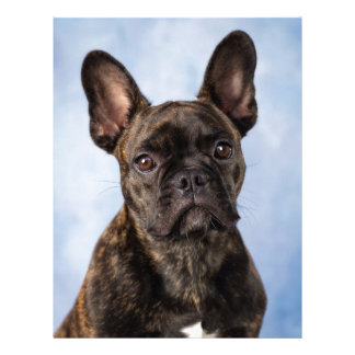 The French Bulldog Letterhead