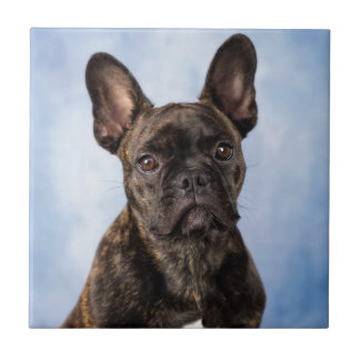 The French Bulldog Tile