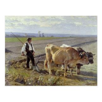 The Furrow, 1897 Postcard