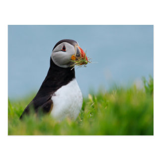 The Gatherer Puffin Postcard