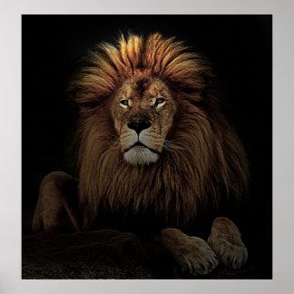 The golden lion print