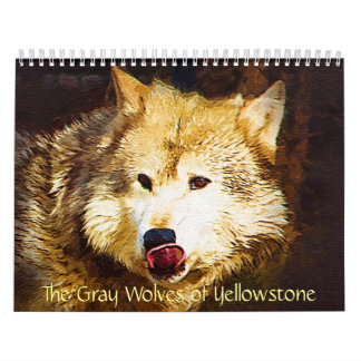 The Gray Wolves of Yellowstone Wall Calendars