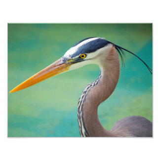 The Great Blue 11 x 14 Photo Print