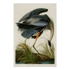 The Great Blue Heron John Audubon Birds of America Poster
