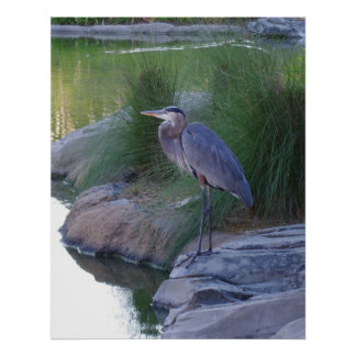 The Great Blue Heron Poster