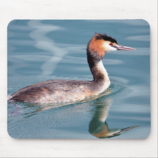 The Great Crested Grebe on water Mouse Pad
