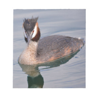 The Great Crested Grebe on water Notepad