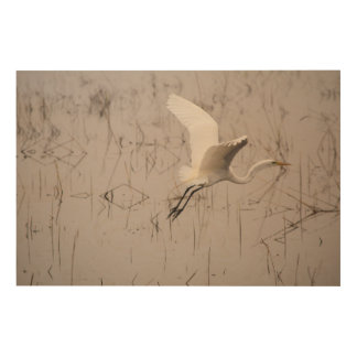 "The Great Egret 36"" x 24"" Wood Wall Art"
