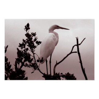 The Great Egret, Florida Keys Poster