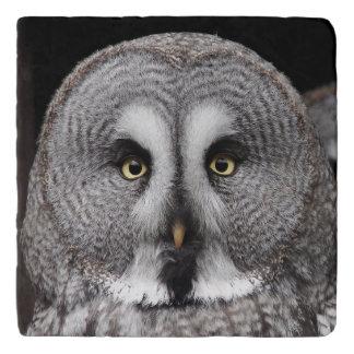 The-great-grey-owl Trivet