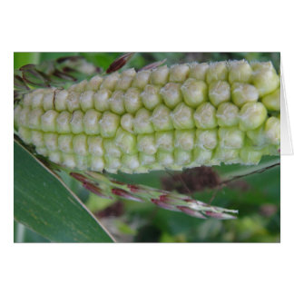 The Green ear of corn, greeting map, shapable in Card