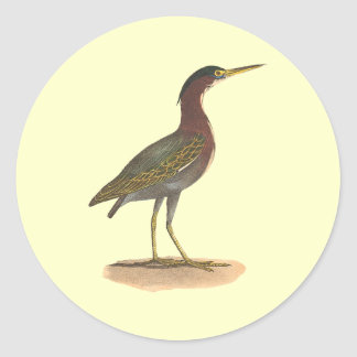 The Green Heron, or Poke (Ardea virescens) Classic Round Sticker