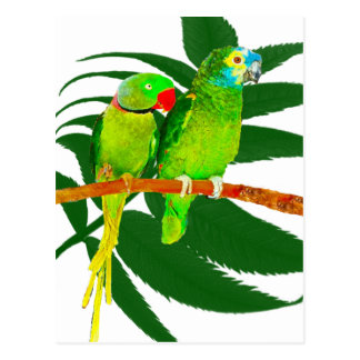 The Green Parrots Gifts Postcard