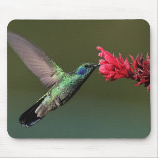 The Green Violetear Mouse Pad