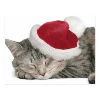 The Grey Cat Sleeps In A New Year's Cap Postcard