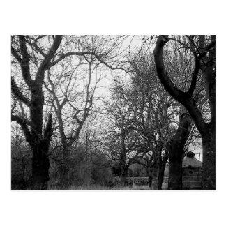 The Grove in Winter - postcard