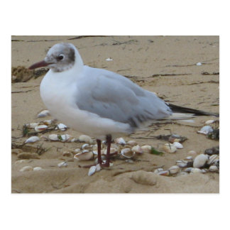 the gull the return postcard
