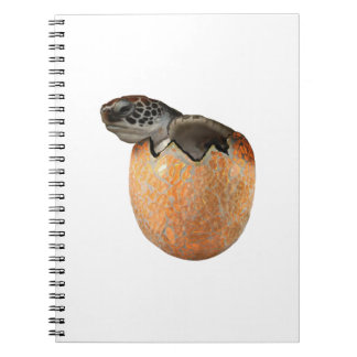 The Hatchling Notebook