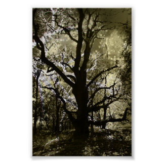 The Haunted Tree Poster