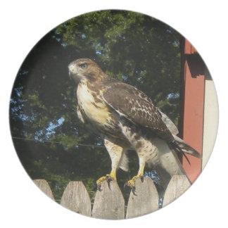 The Hawk Plate