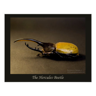 The Hercules Beetle Poster
