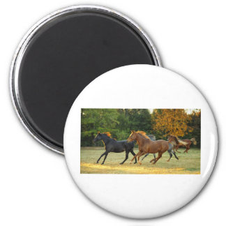 The Herd 2 Inch Round Magnet