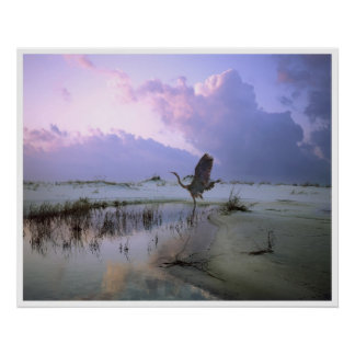 The Heron Takes Flight, Santa Rosa Island Poster
