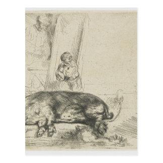 The hog by Rembrandt Postcard