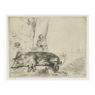 The hog by Rembrandt Postcard