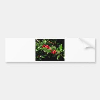 The Holly And The Ivy Bumper Sticker