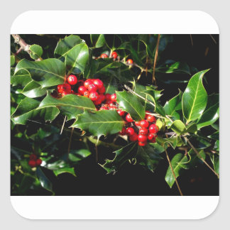 The Holly And The Ivy Square Sticker