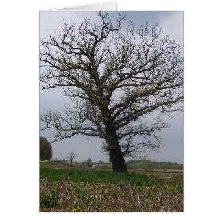 The Huge, Old Oak on 22 Card