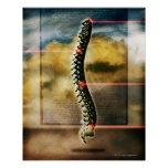 The human spine poster