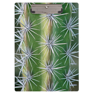 The Huntington Botanical Garden, Octopus Cactus Clipboards